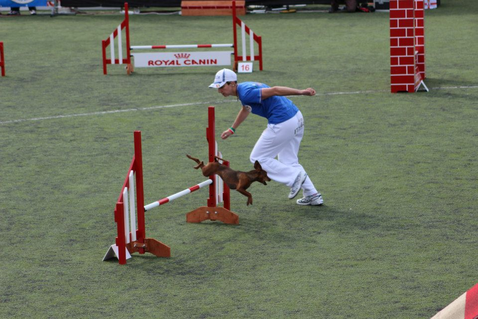 agility dog campo addestramento veruno